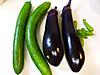 Hatake_eggplant_2